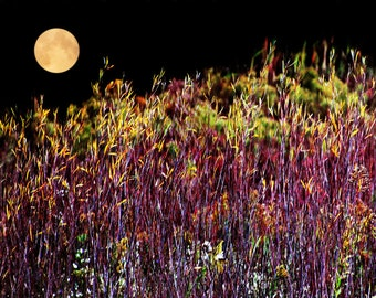 Full Moon Picture, Harvest Moon Photo, Moon Picture, Fall Foliage Print, Moon Print, Full Moon Photo, Fall Picture, Full Moon Print, Moon