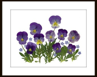 "Pressed Flower Print - 8 x 10"" - Johnny Jump Ups #007"
