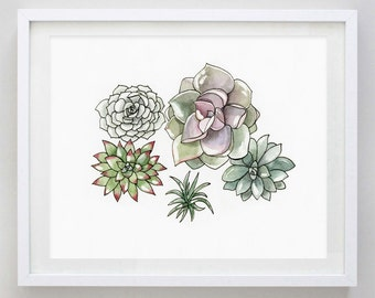 Succulents  2 Watercolor Art Print