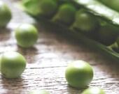 English Peas - Original Fine Art Photograph (garden, farmer, farm to table, vegetables, farmers market)