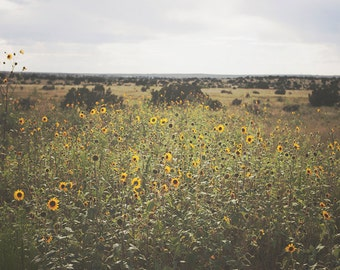 Sunflowers on Route 66 - FINE Art print - Photography, New Mexico, Travel, green, Square, america, rural, america