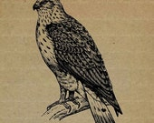 ON SALE 60% OFF Hawk - No.45Km - Digital Image, Printable Clipart, Iron on Transfer for Fabric, Pillows, Towels, Scrapbooking & Crafts