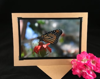 Monarch Butterfly 5x7 Blank greeting card - note card
