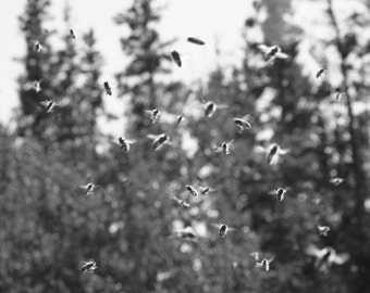 Busy Blury Bees