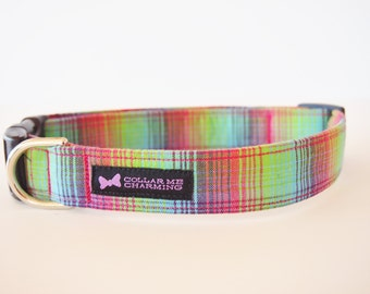Dog Collar Starburst