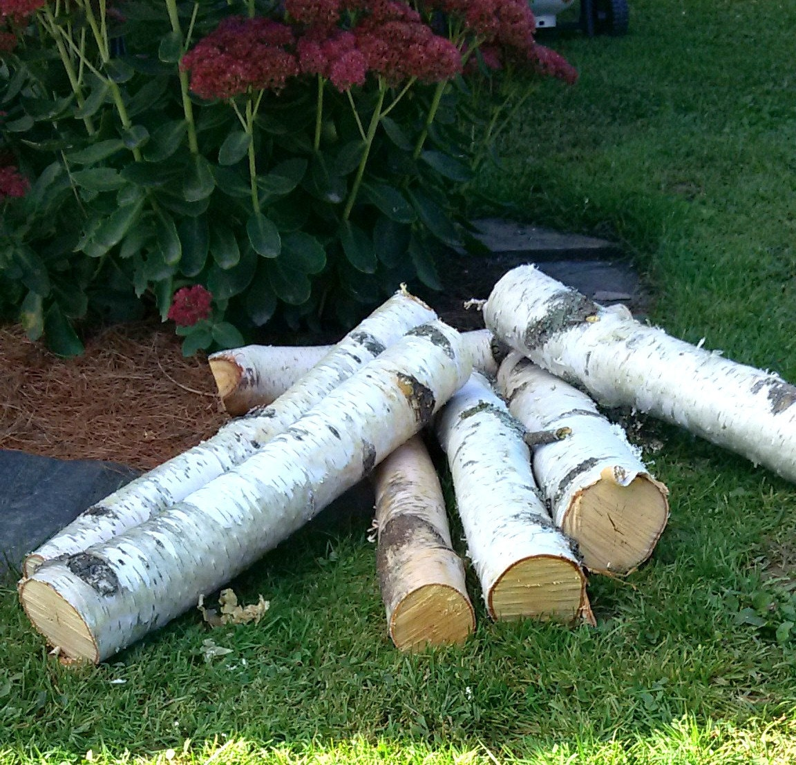 White Birch Logs 2 3 Diameter 18 Long By Therusticwoodshed