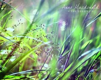 "12"" x 9"" Download,Shetland,Scalloway,Grass,Landscape,Grassy Field,Long Grass Image,Wild Flower Image,Wild Flower Decor,Flower Field,Grasses."