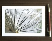 White Peacock Feathers, Photo Greeting Card, Nature Photography Print, Blank Notecard