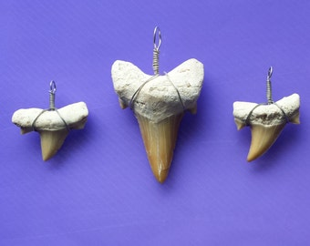 Make your own Shark Tooth Necklace and earring set