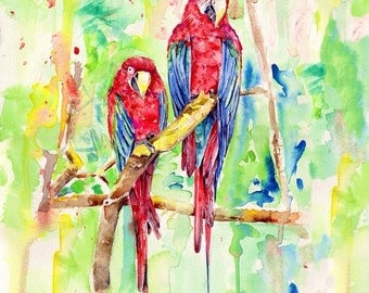 Red Macaw - 30X30cm print