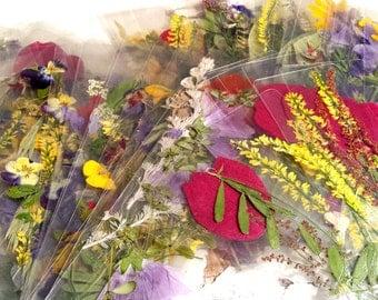 Pair of Real Pressed Flower Bookmarks Large Laminated Flower Bookmarks Set of Two Pressed Flower Bookmark Pair