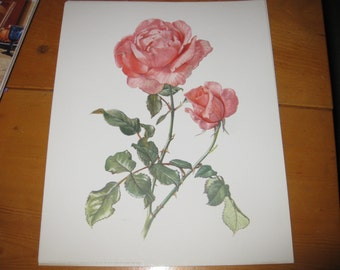 Vtg Donald Art Co 1971 Rose with thorns Shabby Chic printed in West Geramany Free ship