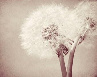 Dandelion Photograph - Nature Art - Wish - Dandelion Art Print - Soft - Flower - Dandelion Wall Decor - Puff Dandelion - Nature Photograph