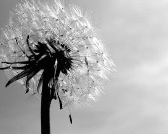 Dandelion Photograph - Nature Art - Wish - Dandelion Art Print - Soft - Flower - Dandelion Wall Decor - Pluffy Dandelion - Nature Photograph