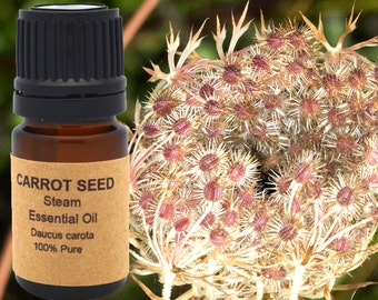 Carrot Seed Essential Oil 5 ml, 10 ml or 15 ml