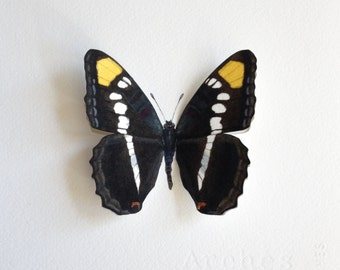Hand-painted Arizona Sister Butterfly Specimen