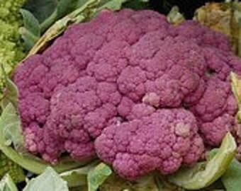 "Purple Cauliflower seeds, Italian heirloom ""Cauliflower di Sicilia Violetto"""
