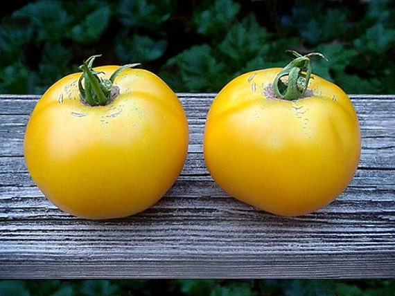 Yellow Brandywine Tomato heirloom tomato seeds