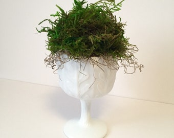 Preserved green moss topiary in vintage white  milk glass compote...