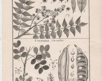 """Vintage Botanical print from 1850s :    Polygamy    engraved by Benard for """"histoire Naturelle"""""""