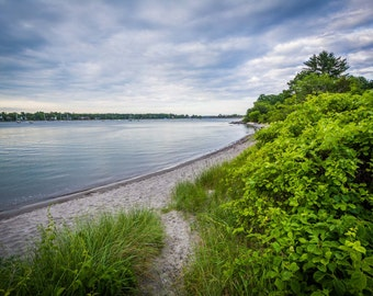 Grasses and the shore at Odiorne Point State Park, in Rye, New Hampshire.   Photo Print, Stretched Canvas, or Metal Print.