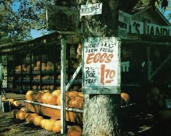 Vintage Pumpkin Eggs Roadside Stand Photo Illustration - Mitchell's Handi Market Ft Payne Alabama - Autumn Fall Country Print Art Wall Decor