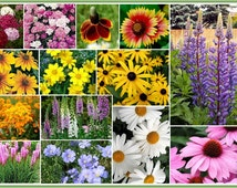 Partial Shade Wildflower Seed Mix, Designed for those hard to establish areas that are shaded. - BULK