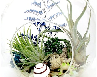 Froggie's Home Live Plant Terrarium, In The Tropics Terrarium™, Tropical Home Decor, Air, Blue, Green ~ Gift For Aunt Mother In Law Sister
