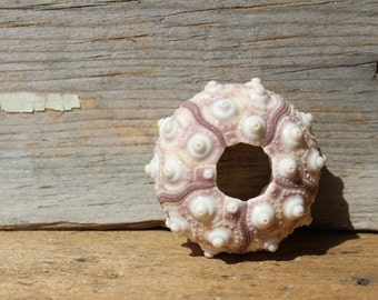 Small Purple Sputnik Sea Urchins 2pc - Seashell Suppy - Urchin - Beach Decor - Craft Shell - Wedding