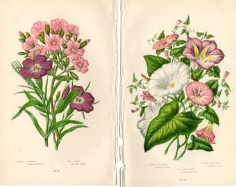 1899 Pair of 2 Antique Botanical Prints Anne Pratt Pink White Floral Flower Art