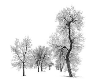 Black and white photo of bare tree silhouettes in winter, modern and graphic