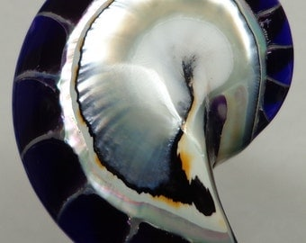Purple Tiger Nautilus Shell half 30mm x 23mm x 7mm