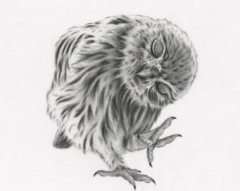 "Owl Art, 8""x10"" Giclee Print of my Charcoal Drawing, Dancing Owl Drawing, Baby Bird Drawing, Bird Sketch, Nursery Art, Baby Owl Sketch"