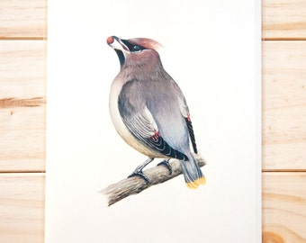 Cedar Waxwing CARD (3-pack)
