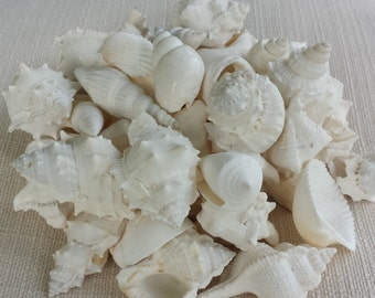 Sea Shells Bulk, White Seashell Mix, White Shell Mix, Seashells, Shells, Bulk Seashells, Beach Decor, Seashell Mix