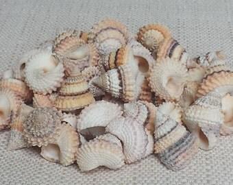 Tiny Shells, Small Shells, Beach Decor, Seashells, Shells, Craft Shells, Periwinkle Shells