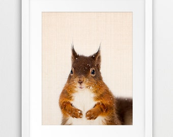 Squirrel Print, Woodlands Animal Wall Art, Forest Animals Photo, Nursery Wall Decor, Woodlands Animal Print, Kids Room Printable Art, DIY