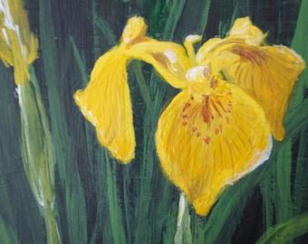 Tea box - hand painted, flower, Yellow Flag Iris