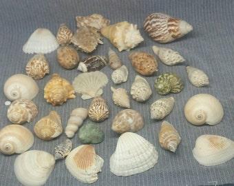 Lot Of Seashells seaside Beach House Decor