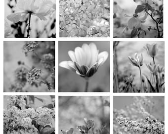 Black & white photography set, floral nature photos, botanical print set of 9 5x5, 8x10 prints, dark grey artwork modern wall gallery decor,