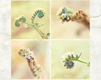 Digital Download Photo set of 4 AUTUMN season Flowers Wall Art Macro 'Cats Curls' SET 02 Photography scenic orange green hue house wall deco