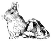 Custom PET Portrait, 3 pets, digital black and white drawing, unique gift for birthday, pet lovers, children, family… ! Cat, dog, rabbit…