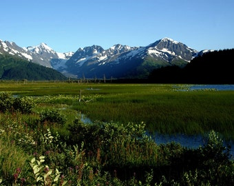 Marshland just past Girdwood, Alaska