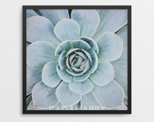 Momma and Baby Succulent Fine Art Print
