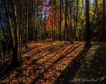 Autumn Photography - Fall Trees Decor, Shadows, Red, Green, Orange, and yellow Fine Art photo, Nature Picture -055