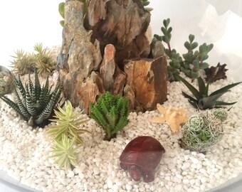 Huge Succulent Glass Fish Bowl Terrarium Kit 47cm