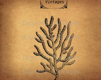 Coral Reef Ocean Sea Life  Antique Vintage Illustration Digital Image Download Printable Graphic Clip Art 300dpi svg jpg png