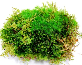 Live moss, a sheet of mixed moss,  for terrarium, vivarium, miniature gardens or craft projects. terrarium plant, Give a natural look.