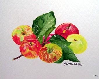No.  796    Marcia's Apples