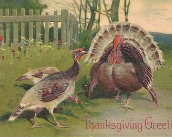 PFB Thanksgiving Turkeys Embossed Vintage Postcard PM 1908